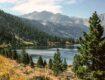 pine tree lake